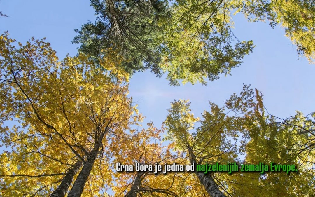 Spot povodom Svjetskog dana šuma